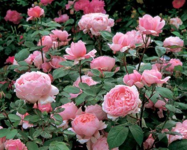 beechmount garden centre online store