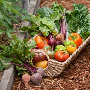 vegetable compost at beechmount garden centre