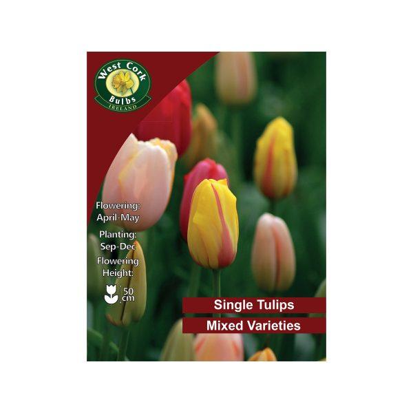 tulip single mixed