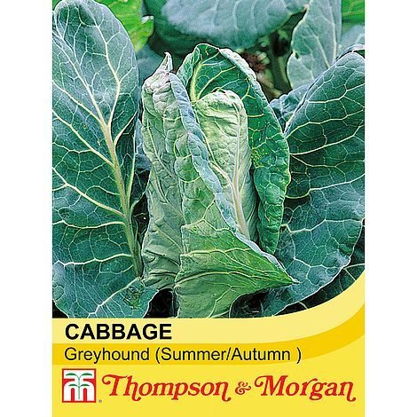 cabbage greyhound @ beechmount garden centre