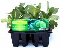 cabbage round at beechmount garden centre