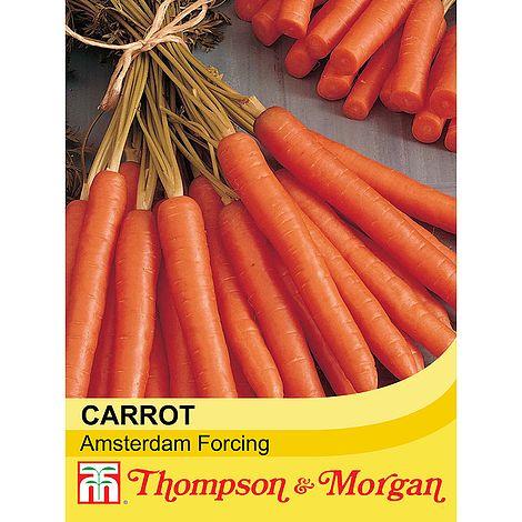 carrot amsterdam forcing @ beechmount garden centre