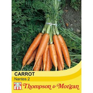 carrot nantes2 @ beechmount garden centre