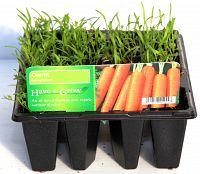 carrots at beechmount garden centre