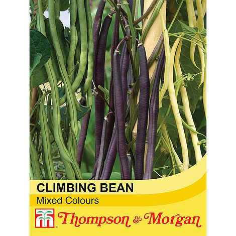 climbing bean mixed at beechmount garden centre