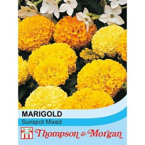 marigold sunspot mixed at beechmount garden centre
