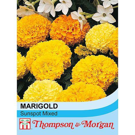 marigold sunspot mixed at beechmount garden centre