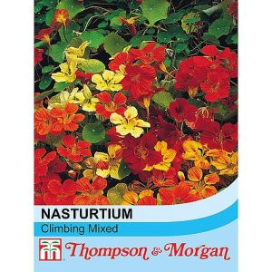 nasturtium climbing mixed at beechmount garden centre