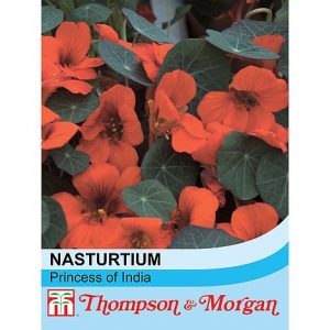 nasturtium princess of india at beechmount garden centre