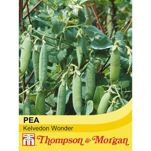pea kelevdon wonder at beechmount garden centre