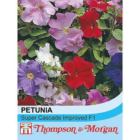 petunia super cascade improved at beechmount garden centre