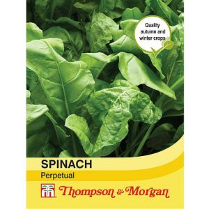 spinach perpetual @ beechmount garden centre