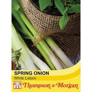 spring onion @ beechmount garden centre