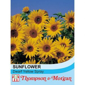 sunflower dwarf yellow spray