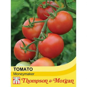 tomato moneymaker at beechmount garden centre