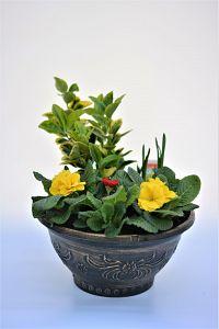 tudor bowl bronze at beechmount garden centre