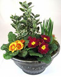 tudor bowl at beechmount garden centre