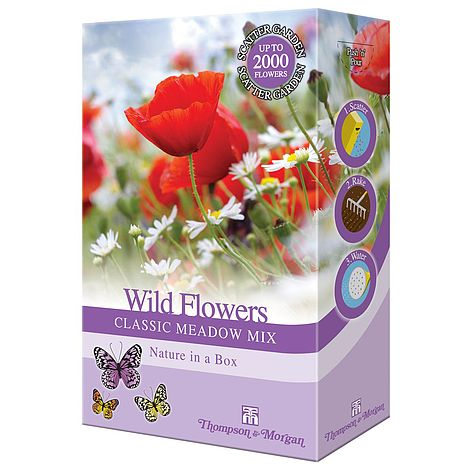 wildflower classic meadow mix at beechmount garden centre