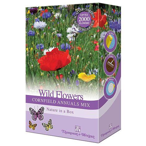 wildflower cornfield annuals at beechmount garden centre