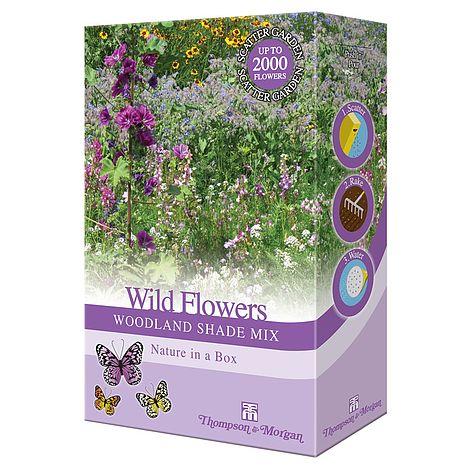 wildflowers woodland shade at beechmount garden centre