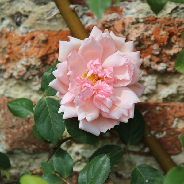 albertine at beechmount garden centre