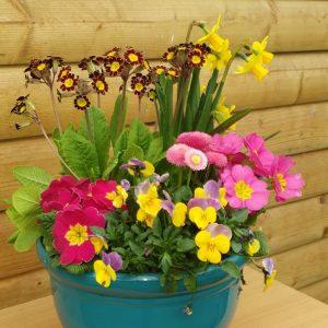 blue pot at beehmount garden centre
