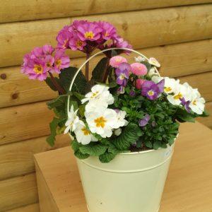 cream pot at beechmount garden centre