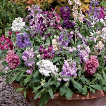 stock at beechmount garden centre