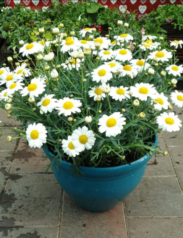 planted container at beechmount garden centre