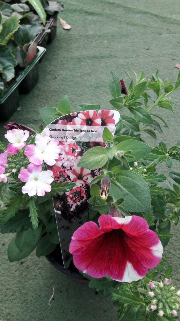 confetti trio at beechmount garden centre