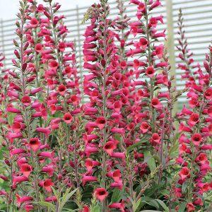 digiplexus at beechmount garden centre