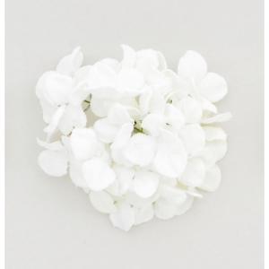 18cm hydrangea w clip cream at beechmount garden centre