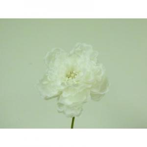 25cm peony w gem cream 02006607 at beechmount garden centre