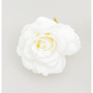 15cm rose w clip cream at beechmount garden centre