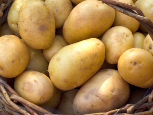 duke of york seed potato at beechmount garden centre