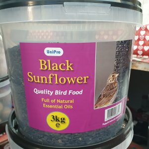 black sunflower sed at beechmount garden centre
