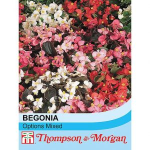 Begonia semperflorens 'Options Mixed' seeds at beechmount garden centre