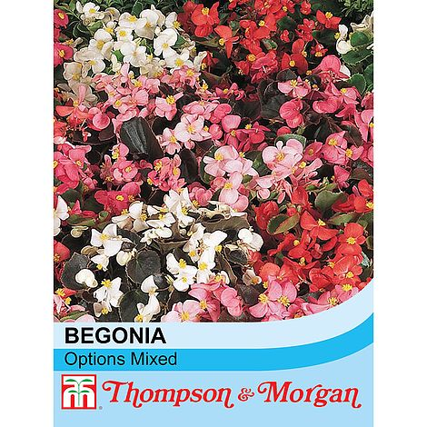 Begonia semperflorens 'Options Mixed' seeds at beechmount garden centre