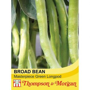 Broad Bean 'Masterpiece Green Longpod' at beechmount garden centre