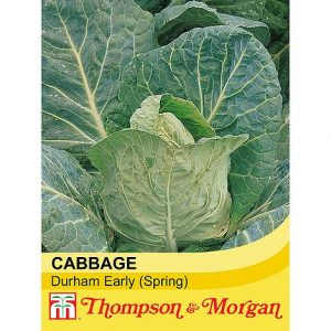 Cabbage 'Durham Early' at beechmount garden centre