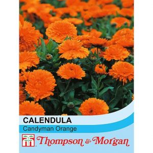 Calendula officinalis 'Candyman Orange' at beechmount garden centre