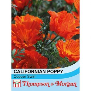 Californian Poppy 'Copper Swirl' at beechmount garden centre