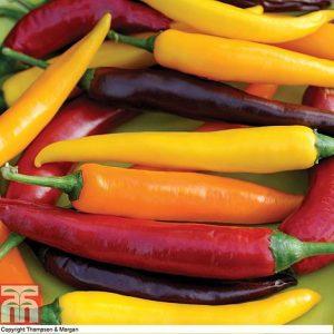 Chilli Pepper 'Heatwave Improved Mix' F1 Hybrid at beechmount garden centre