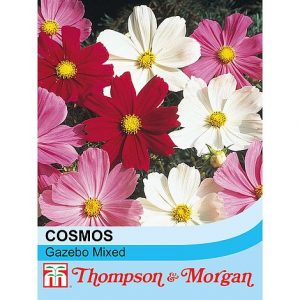 Cosmos bipinnatus 'Gazebo Mixed' seeds at beechmount garden centre