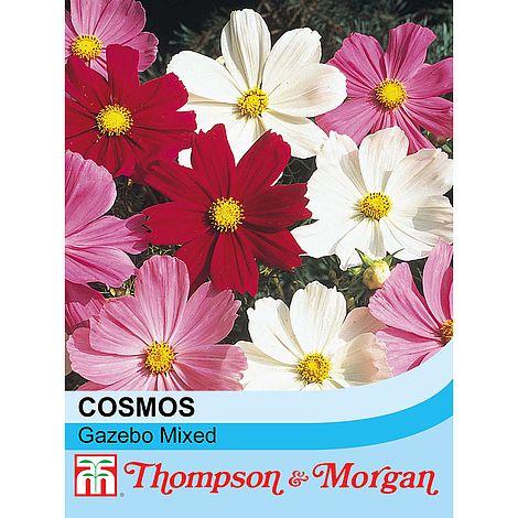 Cosmos bipinnatus 'Gazebo Mixed' seeds at beechmount garden centre