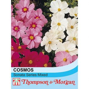 Cosmos bipinnatus 'Sonata Series Mixed' at beechmount garden centre