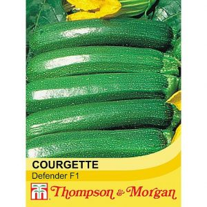 Courgette 'Defender' F1 Hybrid at beechmount garden centre