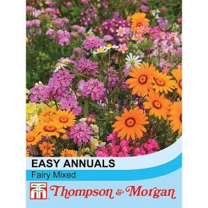 Easy Annuals 'Fairy Mixed' at beechmount garden centre