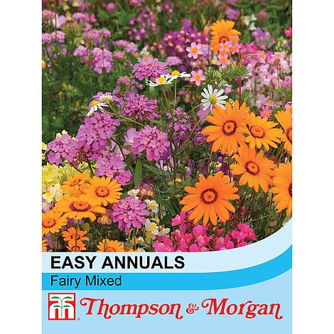 Easy Annuals 'Fairy Mixed' at beechmount garden centre