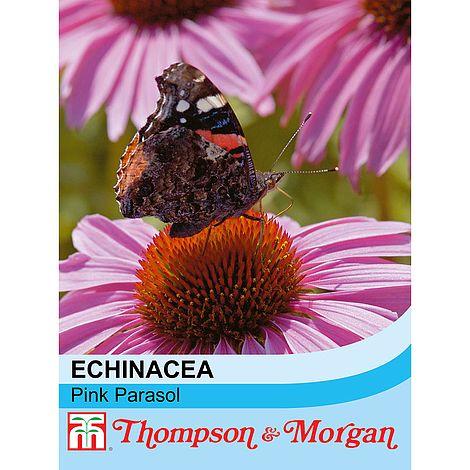 Echinacea purpurea 'Pink Parasol' seeds at beechmount garden centre